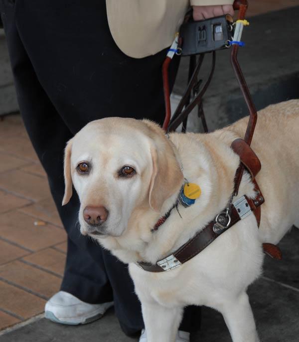 Director 2 – Perro guía