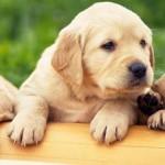 Los perros instrumentistas